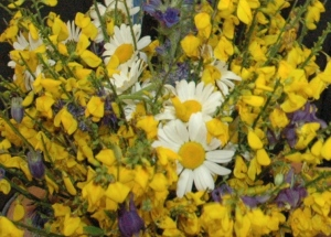 Flowers-cropped-more from 12-16-56